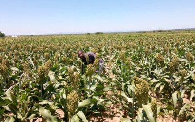 Shamba Darasa, per un'agricoltura sostenibile